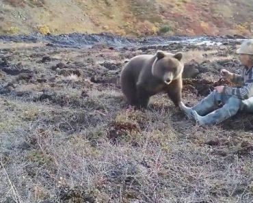 Trabalhador Russo Recebe a Visita De Urso Selvagem Para Partilhar Almoço 11