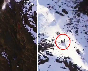 Vídeo Mostra a Incrível Resistência De Um Leopardo Das Neves e a Sua Presa Após Consecutivas Quedas 7