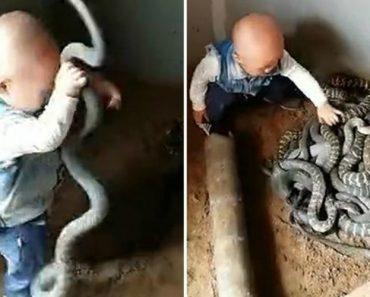 Este Bebé Ainda Não Sabe Falar, Mas Já Brinca Com Cobras 2