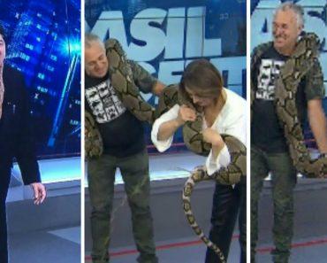 Gigantesca Cobra Urina e Defeca Quase Em Cima De Apresentadora De Programa Televisivo 3