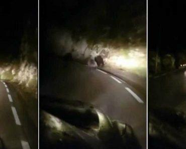 Homens Perseguem Dois Ursos Em Estrada Espanhola 7