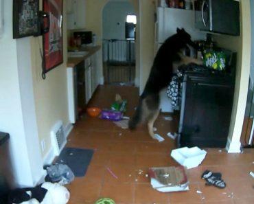 Cão Quase Incendeia Casa Após Ligar Acidentalmente o Fogão 5