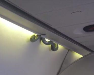 Cobra Venenosa Surpreende Passageiros De Avião Em Pleno Voo 9