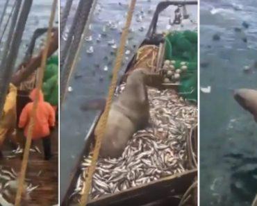 Leão-marinho é Pescado Por Acidente e Ele Nem Se Mostra Incomodado 6