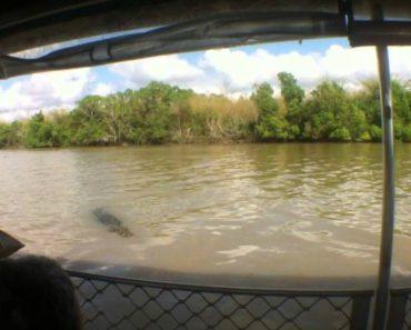Sorrateiro Crocodilo Surpreende Turistas Ao Tentar Atacar Barco 3