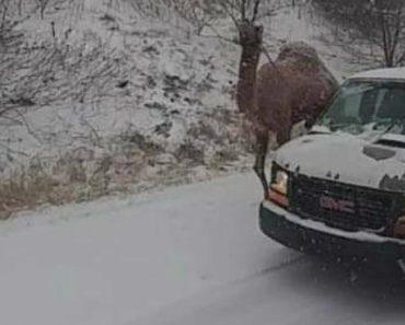 Camelo Aparece Junto a Condutores Durante Nevão Nos Estados Unidos 3