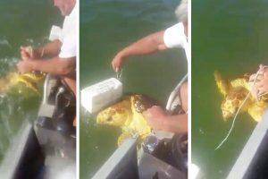 Pescador Salva Tartaruga Presa Em Aparelho Para Pescar Caranguejos 10