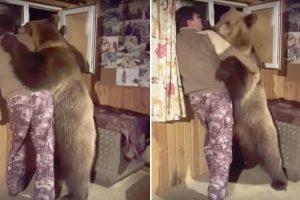 Urso Vai Ao Encontro Do Dono e Juntos Apreciam a Vista Da Janela De Casa 9