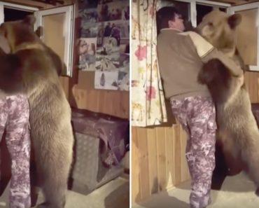 Urso Vai Ao Encontro Do Dono e Juntos Apreciam a Vista Da Janela De Casa 8