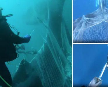 Mergulhadores Libertam Baleia Jubarte Presa a Uma Enorme Rede 8