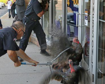 "Cidade Americana Sob ""Ataque"" De Perus 8"