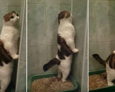 Gato Tem o Invulgar Hábito De Ficar De Pé Enquanto Faz As Necessidades Na Caixa De Areia 3