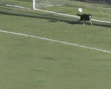 """Cão """"Invade"""" Campo e Evita Golo Em Cima Da Linha 6"""