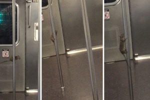 Rato Mostra a Sua Sensualidade Ao Fazer Pole Dance No Interior Do Metro De Nova Iorque 9