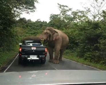 Elefante Assusta Visitantes De Parque Natural Na Tailândia 3