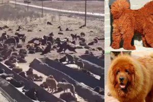 Foram Dos Cães Mais Caros Do Mundo, Agora Estão Ao Abandono 9