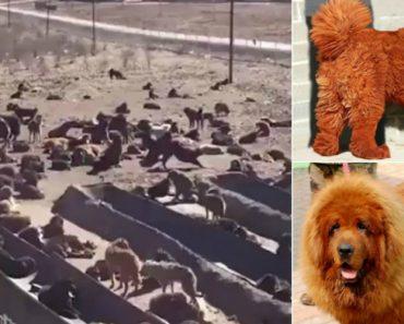 Foram Dos Cães Mais Caros Do Mundo, Agora Estão Ao Abandono 7