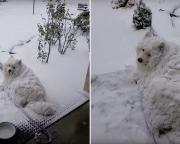 Cão Recusa-se a Vir Para Casa Mesmo Estando Completamente Coberto De Neve 2