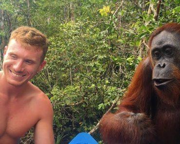 Guloso Orangotango Dá Bofetada a Turista Por Querer Tirar Selfie Com Ele Em Vez De o Alimentar 8