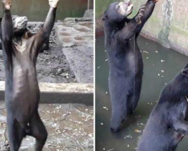 Vídeo Mostra Ursos Subnutridos Implorarem Comida Aos Visitantes De Jardim Zoológico Na Indonésia 1