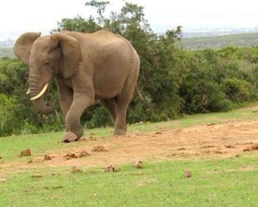 Impaciente Elefante Chuta Tartaruga Por Estar Frustrado Com a Sua Lentidão 6