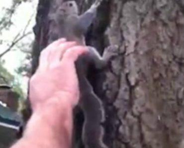 Após Recuperação, Esquilo é Devolvido à Natureza Mas a Sua Libertação Não Foi Exatamente Como Esperavam 3