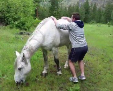 Jovem Comete o Erro De Tentar Montar Um Cavalo Selvagem 8