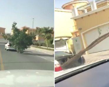 No Dubai As Pessoas Têm Uma Forma Muito Criativa De Transportar Árvores 2