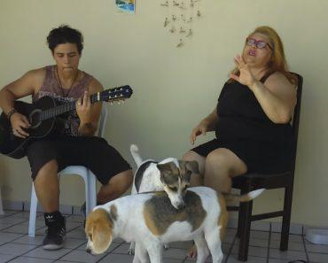 Cães Deixam-se Contagiar Pela Música Romântica Da Dona 4