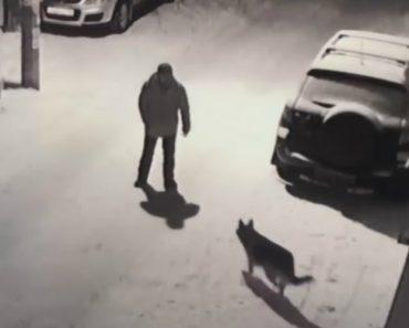 Tentou Dar Pontapé Num Cão e Acabou Por Bater Com a Cara Em Veículo Estacionado 1