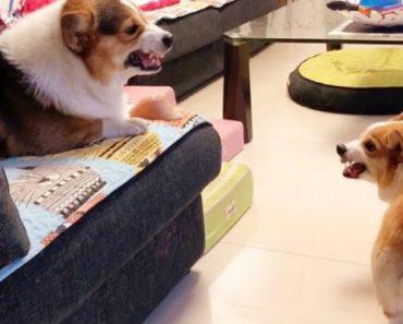 Dono Filma o Relacionamento Atribulado Entre Os Seus Dois Cães 5