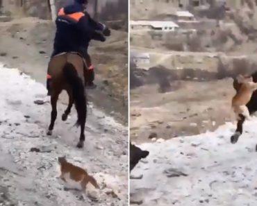 Gato Confunde o Rabo De Um Cavalo Com Um Parque De Diversões 7