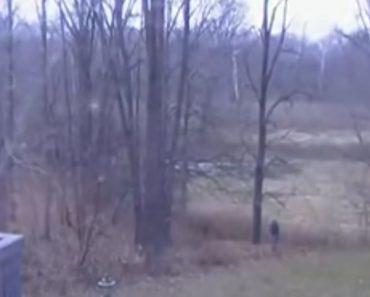 Homem Decide Cortar Árvore e Vizinhos é Que Sofrem As Consequências 7