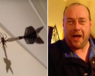 Homem Encontra Aranha Dentro De Casa e Mata-a Com Um Dardo 6