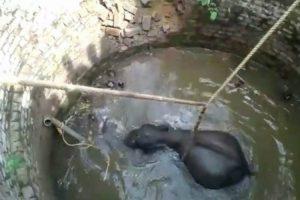 Elefante é Resgatado Após Cair Dentro De Poço Com 11 Metros De Profundidade 10