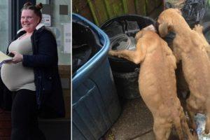 """Mulher Deixa Cachorros à Fome Em Quintal Com Lixo Por Não a """"Deixarem Dormir"""" 8"""
