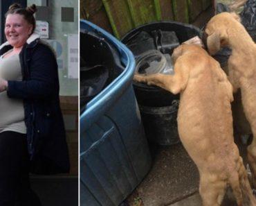 """Mulher Deixa Cachorros à Fome Em Quintal Com Lixo Por Não a """"Deixarem Dormir"""" 3"""