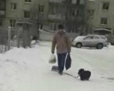 Cão Prova Mais Uma Vez Ser o Melhor Amigo Do Homem Ao Ajudar o Dono a Transportar Cerveja 3
