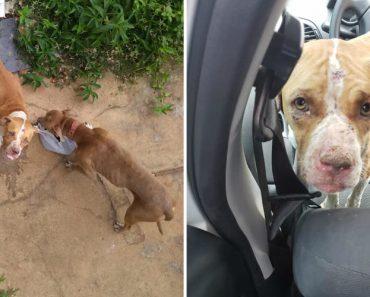Cães Ficaram Fechados Em Casa Durante 36 Dias Sem Água Nem Comida 8