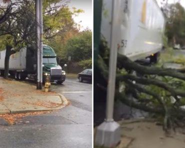 Condutor Percebe Tarde Demais o Quanto é Arriscado Ignorar a Existência De Uma Árvore 6