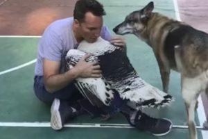 Peru e Cão Competem Entre Si Por Um Abraço Do Seu Dono 10