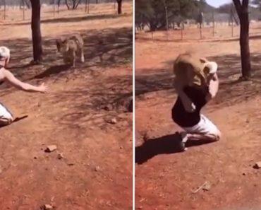 Vídeo Mostra Homem a Pegar Leão Ao Colo Como Se Fosse Um Bebé 4