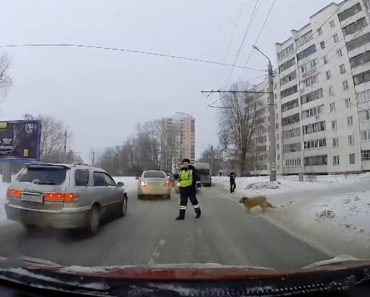 Polícia Pára Trânsito Para Que Cão Em Dificuldades Possa Atravessar a Rua Em Segurança 4