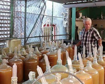 Empresa Produtora De Vinho Usa Preservativos Para o Processo De Fermentação 6