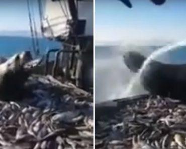 Pescadores Russos Tentam Expulsar Leão-marinho Que Invadiu Barco Para Se Apoderar Da Pescaria 5