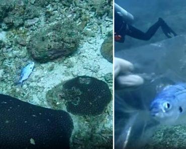 Mergulhadora Salva Peixe Preso Num Saco De Plástico Transparente 4