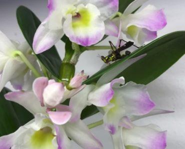 """Inesperado Momento Em Que Orquídea """"Carnívora"""" Devora Um Inseto 6"""