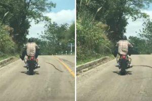 Atento Motociclista Escapa De Ataque De Cobra Enquanto Conduz 9