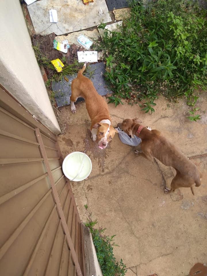 Cães Ficaram Fechados Em Casa Durante 36 Dias Sem Água Nem Comida 1