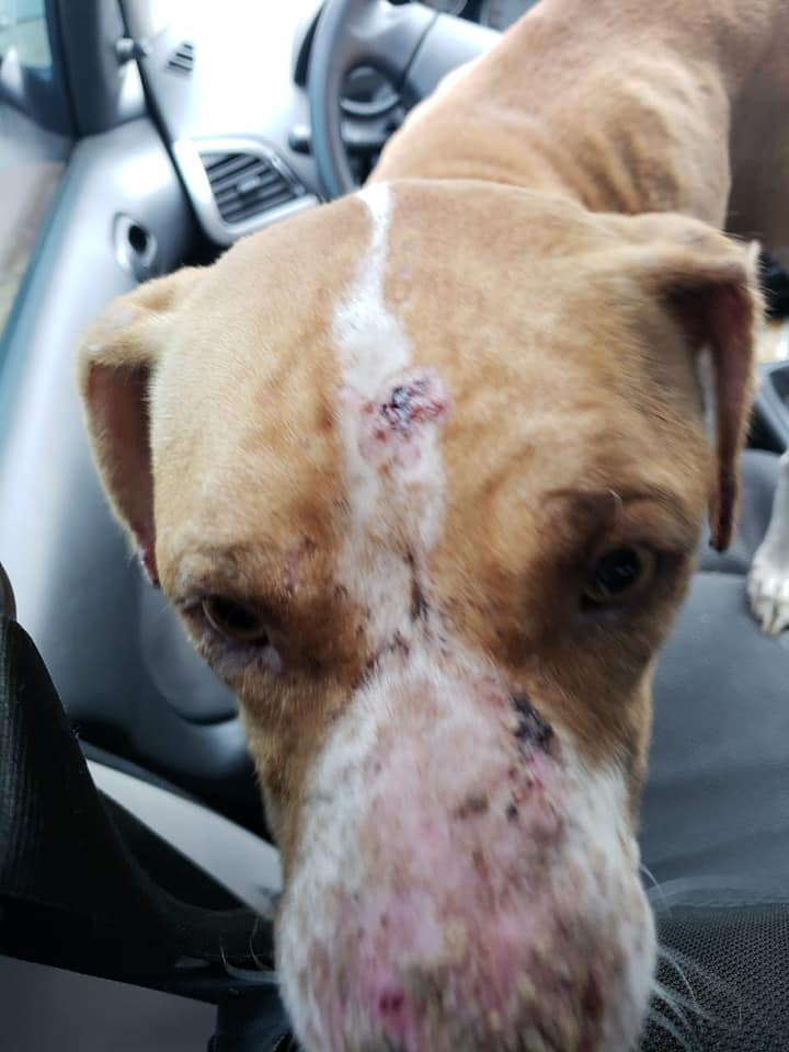 Cães Ficaram Fechados Em Casa Durante 36 Dias Sem Água Nem Comida 3